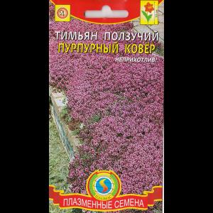 Тимьян Ползучий Пурпурный Ковёр