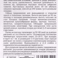 "Томат ""Обские Купола"""