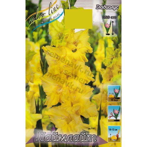 gladiolus-lajmlajt