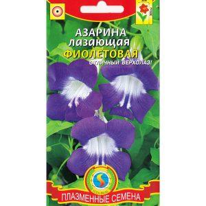 """Азарина лазающая """"Фиолетовая"""""""
