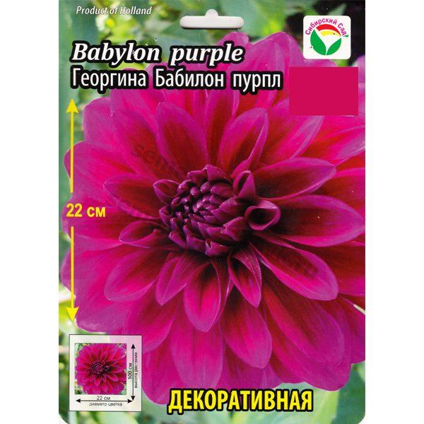 georgina-babylon-purple