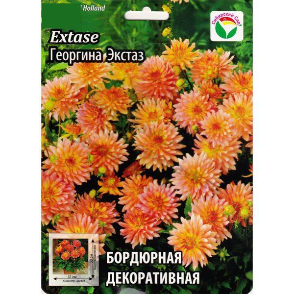 georgina-extase