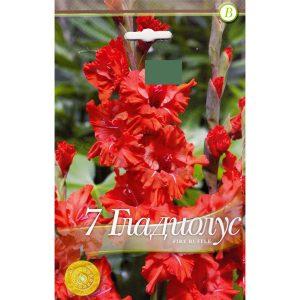 gladiolus-fire-ruffle