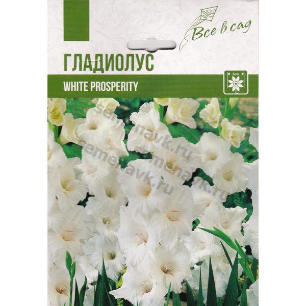 gladiolus-white-prosperity