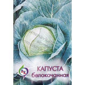 kapusta-belokochannaya-amager