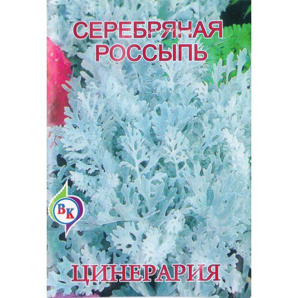 цинерария серебряная россыпь
