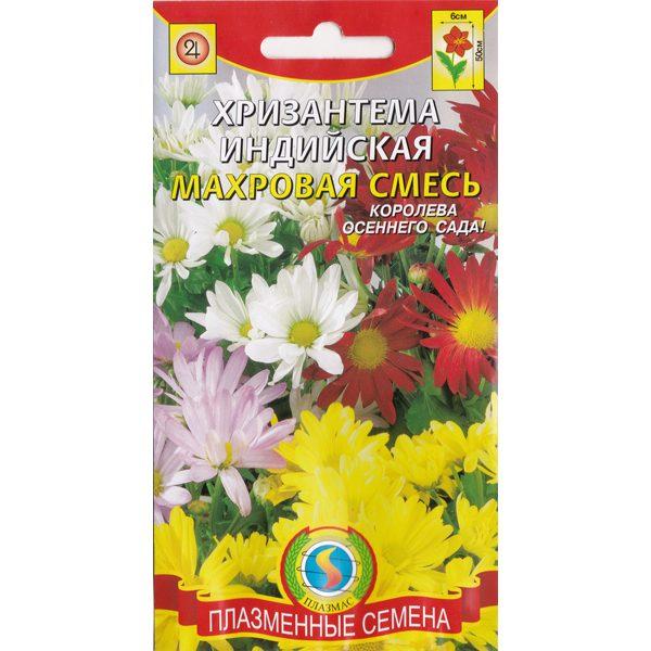 хризантема индийская махровая смесь