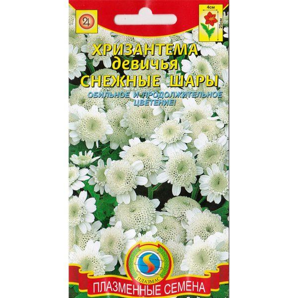 хризантема снежные шары