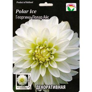 "Георгина ""Polar Ice"""