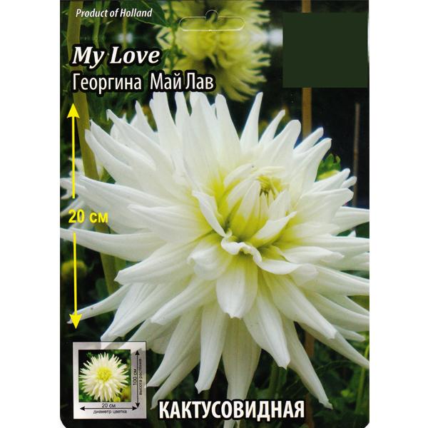 "Георгина ""My love"""