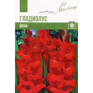 gladiolus-oscar