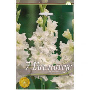 gladiolus-snowy-ruffle