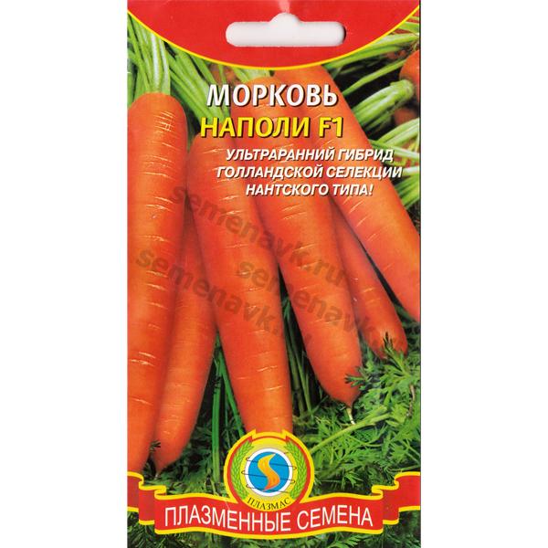 morkov-napoli-f1