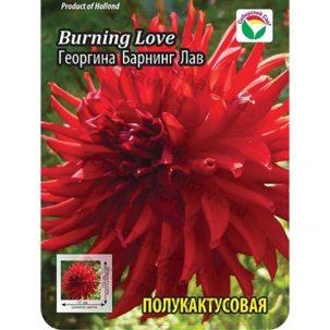 burning-love-georgina