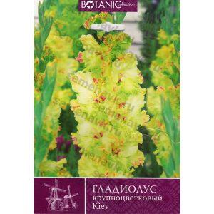 gladiolus-kiev