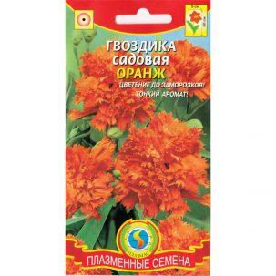 гвоздика садовая оранж