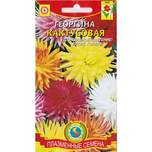 георгина кактусовая