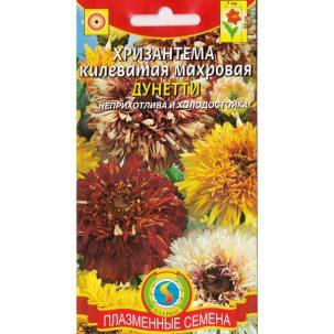 хризантема килеватая махровая дунетти
