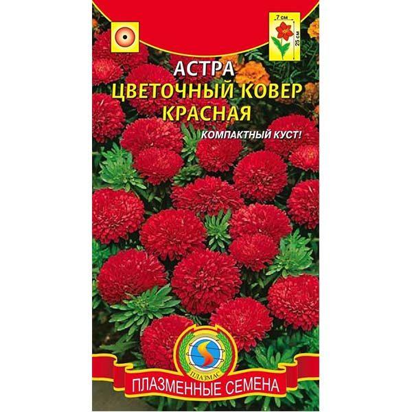астра цветочный ковер красная