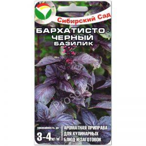 базилик бархатисто-черный