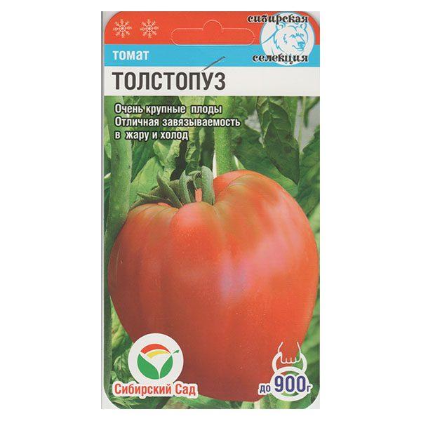 томат толстопуз