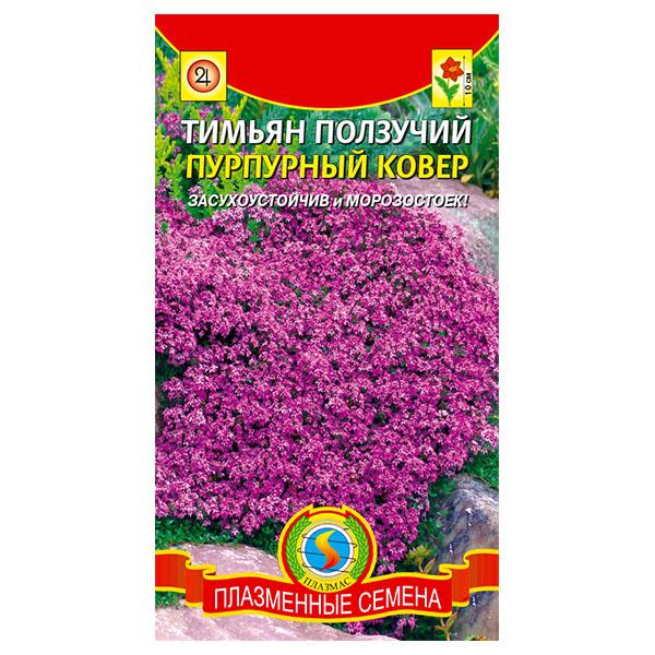купить тимьян ползучий пурпурный ковер